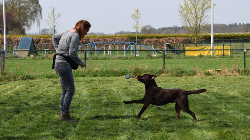 Cursussen bij Pets Academy Hondenschool Veenendaal
